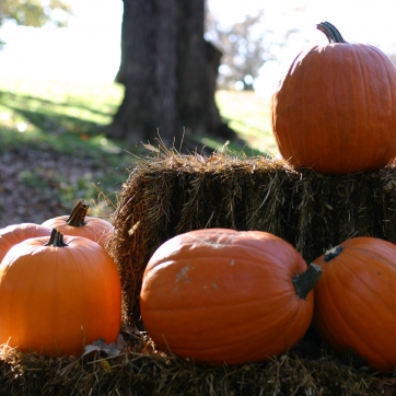 A bunch of pumpkins sit atop a tired stack of hay bales
